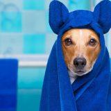 en iyi köpek şampuanı